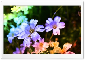 Colored Flowers HD Wide Wallpaper for Widescreen