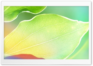 Colored Leaves 4 HD Wide Wallpaper for Widescreen