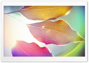 Colored Leaves 9 HD Wide Wallpaper for Widescreen