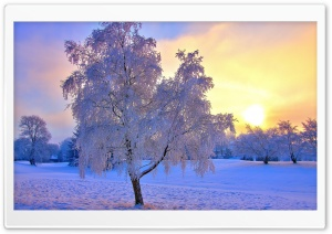 Colored Winter Sunset HD Wide Wallpaper for Widescreen
