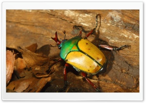 Colorful Beetle HD Wide Wallpaper for Widescreen