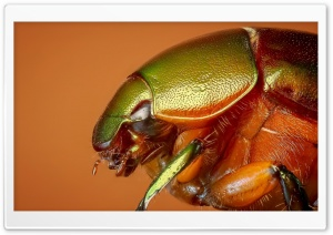 Colorful Beetle Insect Macro HD Wide Wallpaper for 4K UHD Widescreen desktop & smartphone