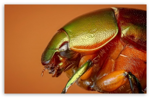 Colorful Beetle Insect Macro ❤ 4K UHD Wallpaper for Wide 16:10 5:3 Widescreen WHXGA WQXGA WUXGA WXGA WGA ; 4K UHD 16:9 Ultra High Definition 2160p 1440p 1080p 900p 720p ; Standard 4:3 5:4 3:2 Fullscreen UXGA XGA SVGA QSXGA SXGA DVGA HVGA HQVGA ( Apple PowerBook G4 iPhone 4 3G 3GS iPod Touch ) ; Smartphone 5:3 WGA ; Tablet 1:1 ; iPad 1/2/Mini ; Mobile 4:3 5:3 3:2 16:9 5:4 - UXGA XGA SVGA WGA DVGA HVGA HQVGA ( Apple PowerBook G4 iPhone 4 3G 3GS iPod Touch ) 2160p 1440p 1080p 900p 720p QSXGA SXGA ;