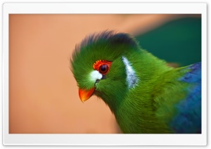Colorful Bird HD Wide Wallpaper for Widescreen