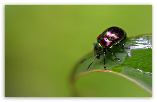 Colorful Bug HD wallpaper for Wide 16:10 5:3 Widescreen WHXGA WQXGA WUXGA WXGA WGA ; HD 16:9 High Definition WQHD QWXGA 1080p 900p 720p QHD nHD ; Standard 4:3 5:4 3:2 Fullscreen UXGA XGA SVGA QSXGA SXGA DVGA HVGA HQVGA devices ( Apple PowerBook G4 iPhone 4 3G 3GS iPod Touch ) ; Tablet 1:1 ; iPad 1/2/Mini ; Mobile 4:3 5:3 3:2 16:9 5:4 - UXGA XGA SVGA WGA DVGA HVGA HQVGA devices ( Apple PowerBook G4 iPhone 4 3G 3GS iPod Touch ) WQHD QWXGA 1080p 900p 720p QHD nHD QSXGA SXGA ;