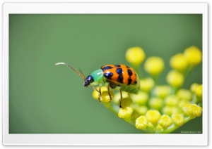 Colorful Bug HD Wide Wallpaper for Widescreen
