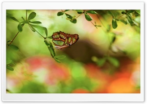 Colorful Butterfly HD Wide Wallpaper for Widescreen