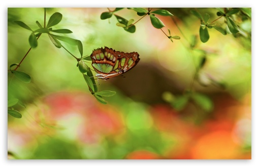 Colorful Butterfly HD wallpaper for Wide 16:10 5:3 Widescreen WHXGA WQXGA WUXGA WXGA WGA ; HD 16:9 High Definition WQHD QWXGA 1080p 900p 720p QHD nHD ; Standard 4:3 5:4 3:2 Fullscreen UXGA XGA SVGA QSXGA SXGA DVGA HVGA HQVGA devices ( Apple PowerBook G4 iPhone 4 3G 3GS iPod Touch ) ; Tablet 1:1 ; iPad 1/2/Mini ; Mobile 4:3 5:3 3:2 16:9 5:4 - UXGA XGA SVGA WGA DVGA HVGA HQVGA devices ( Apple PowerBook G4 iPhone 4 3G 3GS iPod Touch ) WQHD QWXGA 1080p 900p 720p QHD nHD QSXGA SXGA ; Dual 16:10 5:3 16:9 4:3 5:4 WHXGA WQXGA WUXGA WXGA WGA WQHD QWXGA 1080p 900p 720p QHD nHD UXGA XGA SVGA QSXGA SXGA ;