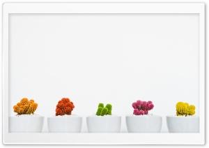 Colorful Cactuses Aesthetic Ultra HD Wallpaper for 4K UHD Widescreen desktop, tablet & smartphone