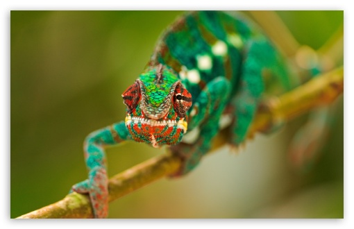 Colorful Chameleon Macro HD wallpaper for Wide 16:10 5:3 Widescreen WHXGA WQXGA WUXGA WXGA WGA ; HD 16:9 High Definition WQHD QWXGA 1080p 900p 720p QHD nHD ; Standard 4:3 5:4 3:2 Fullscreen UXGA XGA SVGA QSXGA SXGA DVGA HVGA HQVGA devices ( Apple PowerBook G4 iPhone 4 3G 3GS iPod Touch ) ; Tablet 1:1 ; iPad 1/2/Mini ; Mobile 4:3 5:3 3:2 16:9 5:4 - UXGA XGA SVGA WGA DVGA HVGA HQVGA devices ( Apple PowerBook G4 iPhone 4 3G 3GS iPod Touch ) WQHD QWXGA 1080p 900p 720p QHD nHD QSXGA SXGA ; Dual 16:10 5:3 16:9 4:3 5:4 WHXGA WQXGA WUXGA WXGA WGA WQHD QWXGA 1080p 900p 720p QHD nHD UXGA XGA SVGA QSXGA SXGA ;