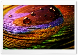 Colorful Cloth HD Wide Wallpaper for Widescreen