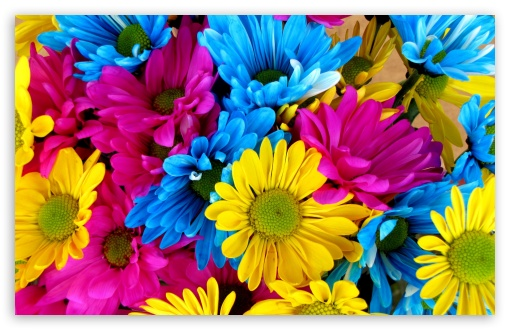 Colorful Daisies ❤ 4K UHD Wallpaper for Wide 16:10 5:3 Widescreen WHXGA WQXGA WUXGA WXGA WGA ; 4K UHD 16:9 Ultra High Definition 2160p 1440p 1080p 900p 720p ; UHD 16:9 2160p 1440p 1080p 900p 720p ; Standard 4:3 5:4 3:2 Fullscreen UXGA XGA SVGA QSXGA SXGA DVGA HVGA HQVGA ( Apple PowerBook G4 iPhone 4 3G 3GS iPod Touch ) ; Smartphone 5:3 WGA ; Tablet 1:1 ; iPad 1/2/Mini ; Mobile 4:3 5:3 3:2 16:9 5:4 - UXGA XGA SVGA WGA DVGA HVGA HQVGA ( Apple PowerBook G4 iPhone 4 3G 3GS iPod Touch ) 2160p 1440p 1080p 900p 720p QSXGA SXGA ;