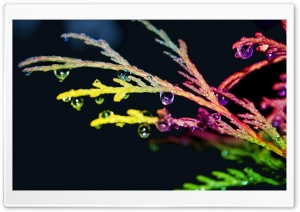 Colorful Drops HD Wide Wallpaper for Widescreen