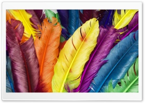 Colorful Feathers HD Wide Wallpaper for Widescreen