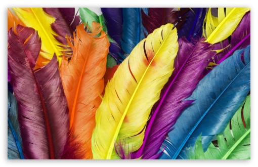 Colorful Feathers HD wallpaper for Wide 16:10 5:3 Widescreen WHXGA WQXGA WUXGA WXGA WGA ; HD 16:9 High Definition WQHD QWXGA 1080p 900p 720p QHD nHD ; Standard 4:3 5:4 3:2 Fullscreen UXGA XGA SVGA QSXGA SXGA DVGA HVGA HQVGA devices ( Apple PowerBook G4 iPhone 4 3G 3GS iPod Touch ) ; Tablet 1:1 ; iPad 1/2/Mini ; Mobile 4:3 5:3 3:2 16:9 5:4 - UXGA XGA SVGA WGA DVGA HVGA HQVGA devices ( Apple PowerBook G4 iPhone 4 3G 3GS iPod Touch ) WQHD QWXGA 1080p 900p 720p QHD nHD QSXGA SXGA ;