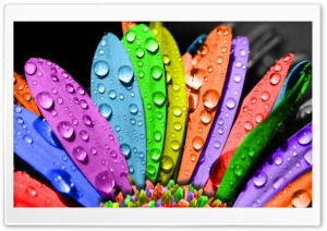 Colorful Flower HD Wide Wallpaper for Widescreen