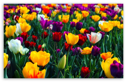 Colorful Flowers HD wallpaper for Wide 16:10 5:3 Widescreen WHXGA WQXGA WUXGA WXGA WGA ; HD 16:9 High Definition WQHD QWXGA 1080p 900p 720p QHD nHD ; Standard 4:3 5:4 3:2 Fullscreen UXGA XGA SVGA QSXGA SXGA DVGA HVGA HQVGA devices ( Apple PowerBook G4 iPhone 4 3G 3GS iPod Touch ) ; Smartphone 5:3 WGA ; Tablet 1:1 ; iPad 1/2/Mini ; Mobile 4:3 5:3 3:2 16:9 5:4 - UXGA XGA SVGA WGA DVGA HVGA HQVGA devices ( Apple PowerBook G4 iPhone 4 3G 3GS iPod Touch ) WQHD QWXGA 1080p 900p 720p QHD nHD QSXGA SXGA ; Dual 16:10 5:3 16:9 4:3 5:4 WHXGA WQXGA WUXGA WXGA WGA WQHD QWXGA 1080p 900p 720p QHD nHD UXGA XGA SVGA QSXGA SXGA ;