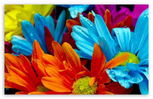 Colorful Flowers HD wallpaper for Wide 16:10 5:3 Widescreen WHXGA WQXGA WUXGA WXGA WGA ; HD 16:9 High Definition WQHD QWXGA 1080p 900p 720p QHD nHD ; UHD 16:9 WQHD QWXGA 1080p 900p 720p QHD nHD ; Standard 4:3 5:4 3:2 Fullscreen UXGA XGA SVGA QSXGA SXGA DVGA HVGA HQVGA devices ( Apple PowerBook G4 iPhone 4 3G 3GS iPod Touch ) ; Tablet 1:1 ; iPad 1/2/Mini ; Mobile 4:3 5:3 3:2 16:9 5:4 - UXGA XGA SVGA WGA DVGA HVGA HQVGA devices ( Apple PowerBook G4 iPhone 4 3G 3GS iPod Touch ) WQHD QWXGA 1080p 900p 720p QHD nHD QSXGA SXGA ; Dual 16:10 4:3 5:4 WHXGA WQXGA WUXGA WXGA UXGA XGA SVGA QSXGA SXGA ;