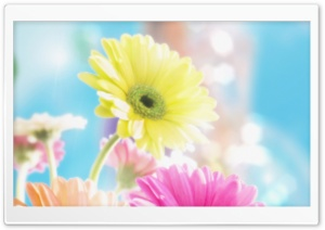 Colorful Flowers 2 HD Wide Wallpaper for Widescreen