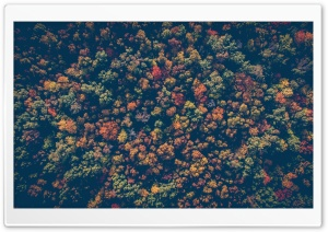 Colorful Forest HD Wide Wallpaper for Widescreen
