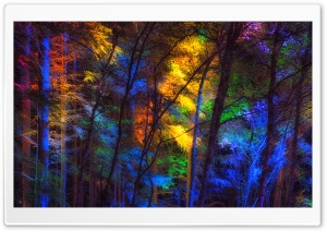 Colorful Forest Trees HD Wide Wallpaper for Widescreen
