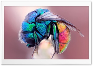Colorful Insect HD Wide Wallpaper for Widescreen