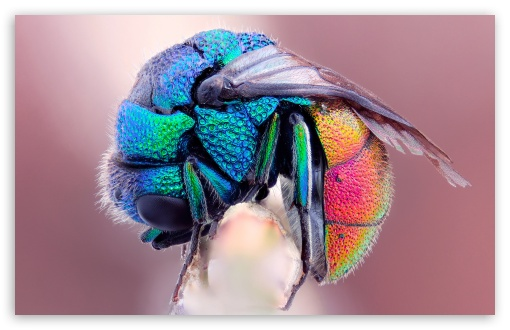 Colorful Insect ❤ 4K UHD Wallpaper for Wide 16:10 5:3 Widescreen WHXGA WQXGA WUXGA WXGA WGA ; 4K UHD 16:9 Ultra High Definition 2160p 1440p 1080p 900p 720p ; Standard 4:3 5:4 3:2 Fullscreen UXGA XGA SVGA QSXGA SXGA DVGA HVGA HQVGA ( Apple PowerBook G4 iPhone 4 3G 3GS iPod Touch ) ; Tablet 1:1 ; iPad 1/2/Mini ; Mobile 4:3 5:3 3:2 16:9 5:4 - UXGA XGA SVGA WGA DVGA HVGA HQVGA ( Apple PowerBook G4 iPhone 4 3G 3GS iPod Touch ) 2160p 1440p 1080p 900p 720p QSXGA SXGA ;
