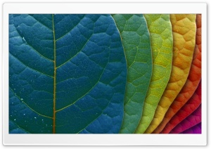 Colorful Leaves HD Wide Wallpaper for Widescreen