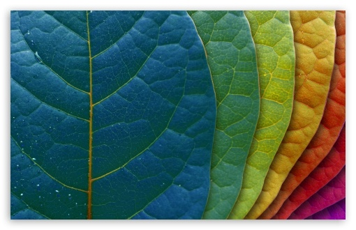 Colorful Leaves HD wallpaper for Standard 4:3 5:4 Fullscreen UXGA XGA SVGA QSXGA SXGA ; Wide 16:10 5:3 Widescreen WHXGA WQXGA WUXGA WXGA WGA ; HD 16:9 High Definition WQHD QWXGA 1080p 900p 720p QHD nHD ; Other 3:2 DVGA HVGA HQVGA devices ( Apple PowerBook G4 iPhone 4 3G 3GS iPod Touch ) ; Mobile VGA WVGA iPhone iPad PSP Phone - VGA QVGA Smartphone ( PocketPC GPS iPod Zune BlackBerry HTC Samsung LG Nokia Eten Asus ) WVGA WQVGA Smartphone ( HTC Samsung Sony Ericsson LG Vertu MIO ) HVGA Smartphone ( Apple iPhone iPod BlackBerry HTC Samsung Nokia ) Sony PSP Zune HD Zen ;