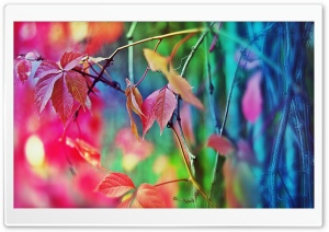 Colorful Leaves Ultra HD Wallpaper for 4K UHD Widescreen desktop, tablet & smartphone