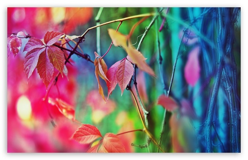 Colorful Leaves ❤ 4K UHD Wallpaper for Wide 16:10 5:3 Widescreen WHXGA WQXGA WUXGA WXGA WGA ; 4K UHD 16:9 Ultra High Definition 2160p 1440p 1080p 900p 720p ; UHD 16:9 2160p 1440p 1080p 900p 720p ; Standard 4:3 5:4 3:2 Fullscreen UXGA XGA SVGA QSXGA SXGA DVGA HVGA HQVGA ( Apple PowerBook G4 iPhone 4 3G 3GS iPod Touch ) ; Tablet 1:1 ; iPad 1/2/Mini ; Mobile 4:3 5:3 3:2 16:9 5:4 - UXGA XGA SVGA WGA DVGA HVGA HQVGA ( Apple PowerBook G4 iPhone 4 3G 3GS iPod Touch ) 2160p 1440p 1080p 900p 720p QSXGA SXGA ; Dual 16:10 5:3 16:9 4:3 5:4 WHXGA WQXGA WUXGA WXGA WGA 2160p 1440p 1080p 900p 720p UXGA XGA SVGA QSXGA SXGA ;
