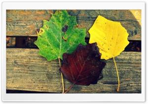Colorful leaves HD Wide Wallpaper for 4K UHD Widescreen desktop & smartphone
