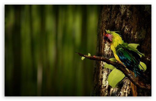 Colorful Parrot ❤ 4K UHD Wallpaper for Wide 16:10 5:3 Widescreen WHXGA WQXGA WUXGA WXGA WGA ; 4K UHD 16:9 Ultra High Definition 2160p 1440p 1080p 900p 720p ; Standard 4:3 5:4 3:2 Fullscreen UXGA XGA SVGA QSXGA SXGA DVGA HVGA HQVGA ( Apple PowerBook G4 iPhone 4 3G 3GS iPod Touch ) ; Tablet 1:1 ; iPad 1/2/Mini ; Mobile 4:3 5:3 3:2 16:9 5:4 - UXGA XGA SVGA WGA DVGA HVGA HQVGA ( Apple PowerBook G4 iPhone 4 3G 3GS iPod Touch ) 2160p 1440p 1080p 900p 720p QSXGA SXGA ; Dual 4:3 5:4 UXGA XGA SVGA QSXGA SXGA ;
