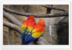 Colorful Parrots HD Wide Wallpaper for Widescreen