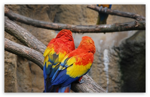 Colorful Parrots ❤ 4K UHD Wallpaper for Wide 16:10 5:3 Widescreen WHXGA WQXGA WUXGA WXGA WGA ; 4K UHD 16:9 Ultra High Definition 2160p 1440p 1080p 900p 720p ; Standard 4:3 5:4 3:2 Fullscreen UXGA XGA SVGA QSXGA SXGA DVGA HVGA HQVGA ( Apple PowerBook G4 iPhone 4 3G 3GS iPod Touch ) ; Tablet 1:1 ; iPad 1/2/Mini ; Mobile 4:3 5:3 3:2 16:9 5:4 - UXGA XGA SVGA WGA DVGA HVGA HQVGA ( Apple PowerBook G4 iPhone 4 3G 3GS iPod Touch ) 2160p 1440p 1080p 900p 720p QSXGA SXGA ;