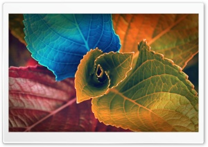 Colorful Plant HD Wide Wallpaper for Widescreen
