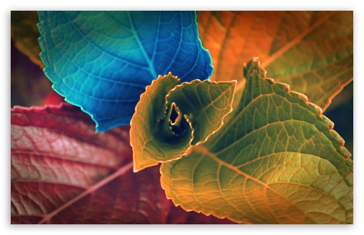 Colorful Plant HD wallpaper for Standard 4:3 5:4 Fullscreen UXGA XGA SVGA QSXGA SXGA ; Wide 16:10 5:3 Widescreen WHXGA WQXGA WUXGA WXGA WGA ; HD 16:9 High Definition WQHD QWXGA 1080p 900p 720p QHD nHD ; Other 3:2 DVGA HVGA HQVGA devices ( Apple PowerBook G4 iPhone 4 3G 3GS iPod Touch ) ; Mobile VGA WVGA iPhone iPad PSP Phone - VGA QVGA Smartphone ( PocketPC GPS iPod Zune BlackBerry HTC Samsung LG Nokia Eten Asus ) WVGA WQVGA Smartphone ( HTC Samsung Sony Ericsson LG Vertu MIO ) HVGA Smartphone ( Apple iPhone iPod BlackBerry HTC Samsung Nokia ) Sony PSP Zune HD Zen ; Tablet 2 Android ;