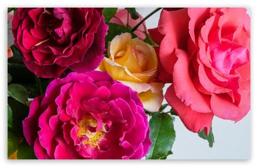 Colorful Roses UltraHD Wallpaper for Wide 16:10 5:3 Widescreen WHXGA WQXGA WUXGA WXGA WGA ; UltraWide 21:9 24:10 ; 8K UHD TV 16:9 Ultra High Definition 2160p 1440p 1080p 900p 720p ; UHD 16:9 2160p 1440p 1080p 900p 720p ; Standard 4:3 5:4 3:2 Fullscreen UXGA XGA SVGA QSXGA SXGA DVGA HVGA HQVGA ( Apple PowerBook G4 iPhone 4 3G 3GS iPod Touch ) ; Smartphone 16:9 3:2 5:3 2160p 1440p 1080p 900p 720p DVGA HVGA HQVGA ( Apple PowerBook G4 iPhone 4 3G 3GS iPod Touch ) WGA ; Tablet 1:1 ; iPad 1/2/Mini ; Mobile 4:3 5:3 3:2 16:9 5:4 - UXGA XGA SVGA WGA DVGA HVGA HQVGA ( Apple PowerBook G4 iPhone 4 3G 3GS iPod Touch ) 2160p 1440p 1080p 900p 720p QSXGA SXGA ;
