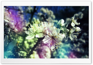Colorful Spring HD Wide Wallpaper for Widescreen