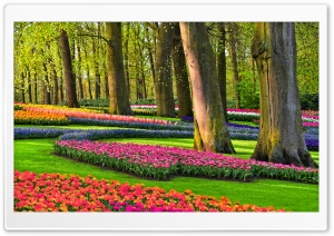 Colorful Spring Gardens, Holland, Netherlands HD Wide Wallpaper for 4K UHD Widescreen desktop & smartphone