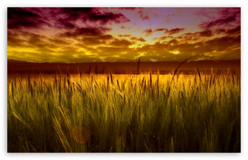 Colorful Sunset Over Wheat Field HD wallpaper for Wide 16:10 5:3 Widescreen WHXGA WQXGA WUXGA WXGA WGA ; HD 16:9 High Definition WQHD QWXGA 1080p 900p 720p QHD nHD ; Standard 4:3 5:4 3:2 Fullscreen UXGA XGA SVGA QSXGA SXGA DVGA HVGA HQVGA devices ( Apple PowerBook G4 iPhone 4 3G 3GS iPod Touch ) ; Tablet 1:1 ; iPad 1/2/Mini ; Mobile 4:3 5:3 3:2 16:9 5:4 - UXGA XGA SVGA WGA DVGA HVGA HQVGA devices ( Apple PowerBook G4 iPhone 4 3G 3GS iPod Touch ) WQHD QWXGA 1080p 900p 720p QHD nHD QSXGA SXGA ; Dual 5:4 QSXGA SXGA ;