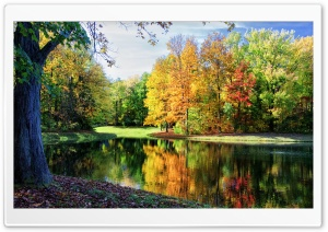 Colorful Trees Reflections HD Wide Wallpaper for Widescreen