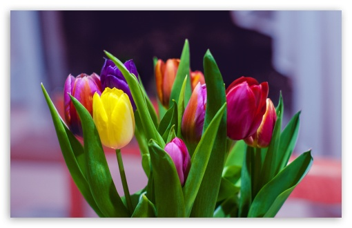 Colorful Tulips Bouquet ❤ 4K UHD Wallpaper for Wide 16:10 5:3 Widescreen WHXGA WQXGA WUXGA WXGA WGA ; 4K UHD 16:9 Ultra High Definition 2160p 1440p 1080p 900p 720p ; Standard 4:3 5:4 3:2 Fullscreen UXGA XGA SVGA QSXGA SXGA DVGA HVGA HQVGA ( Apple PowerBook G4 iPhone 4 3G 3GS iPod Touch ) ; Smartphone 5:3 WGA ; Tablet 1:1 ; iPad 1/2/Mini ; Mobile 4:3 5:3 3:2 16:9 5:4 - UXGA XGA SVGA WGA DVGA HVGA HQVGA ( Apple PowerBook G4 iPhone 4 3G 3GS iPod Touch ) 2160p 1440p 1080p 900p 720p QSXGA SXGA ;