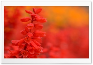 Colors Everywere HD Wide Wallpaper for Widescreen