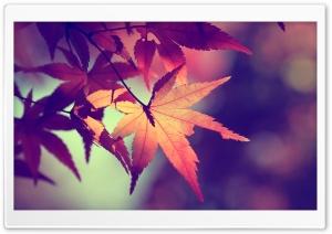 Colors of fall Ultra HD Wallpaper for 4K UHD Widescreen desktop, tablet & smartphone