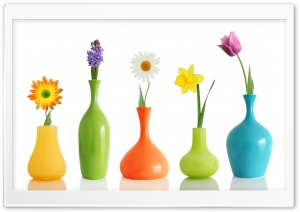 Colorul Flower Vases HD Wide Wallpaper for Widescreen