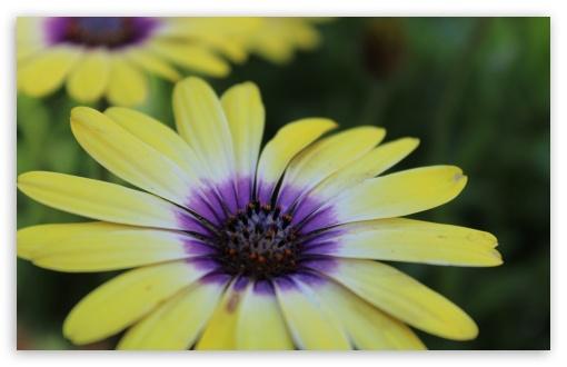 Colourful Flower ❤ 4K UHD Wallpaper for Wide 16:10 5:3 Widescreen WHXGA WQXGA WUXGA WXGA WGA ; UltraWide 21:9 24:10 ; 4K UHD 16:9 Ultra High Definition 2160p 1440p 1080p 900p 720p ; UHD 16:9 2160p 1440p 1080p 900p 720p ; Standard 4:3 5:4 3:2 Fullscreen UXGA XGA SVGA QSXGA SXGA DVGA HVGA HQVGA ( Apple PowerBook G4 iPhone 4 3G 3GS iPod Touch ) ; Smartphone 16:9 3:2 5:3 2160p 1440p 1080p 900p 720p DVGA HVGA HQVGA ( Apple PowerBook G4 iPhone 4 3G 3GS iPod Touch ) WGA ; Tablet 1:1 ; iPad 1/2/Mini ; Mobile 4:3 5:3 3:2 16:9 5:4 - UXGA XGA SVGA WGA DVGA HVGA HQVGA ( Apple PowerBook G4 iPhone 4 3G 3GS iPod Touch ) 2160p 1440p 1080p 900p 720p QSXGA SXGA ;