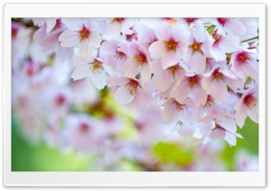 Colours of Spring HD Wide Wallpaper for Widescreen