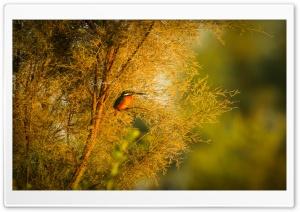 Common kingfisher HD Wide Wallpaper for 4K UHD Widescreen desktop & smartphone
