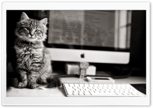 Computer Cat HD Wide Wallpaper for 4K UHD Widescreen desktop & smartphone